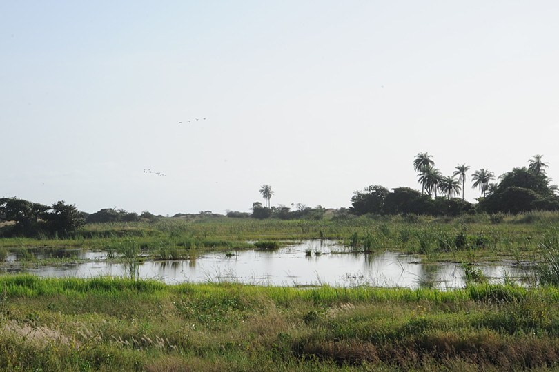The wetlands at Kartong Bird Observatory in The Gambia, West Africa